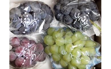 ぶどうCC-2 上田市産ぶどう2kg 三色詰め合わせ(種類おまかせ)