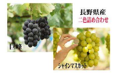 ぶどうCC-3 上田市産ぶどう2kg 二色詰め合わせ(種類おまかせ)