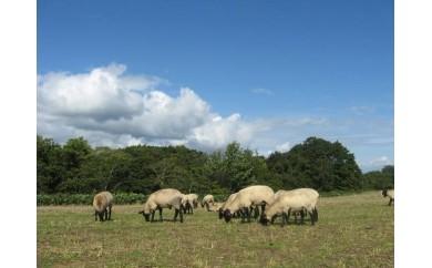 サフォークラム 羊1頭