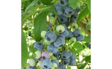 三谷果樹園 ブルーベリー(冷凍)1キログラム