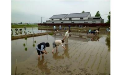 B-2  農業体験(田植えと収穫体験)※3/31締切
