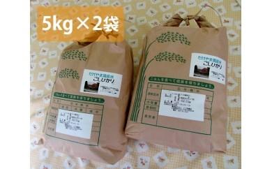 No.001 府中市の岳山清流米コシヒカリ10kg
