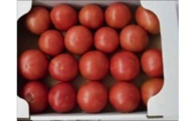 【受付終了】H005 トマト【4000pt】