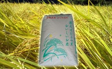 ほたる米ひとめぼれ(精米10kg)