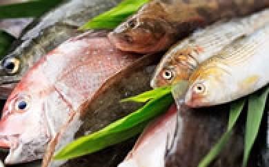 BJ02 燧灘のお魚お楽しみセット【90pt】