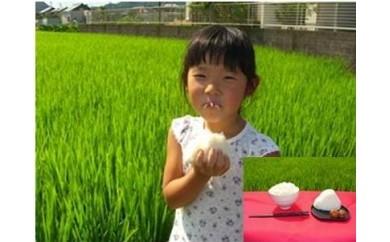 31 岐阜県産 まごころ農園のまごころ米(ハツシモ)白米10㎏