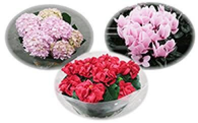 [№5698-0048]季節の鉢花(3回頒布)