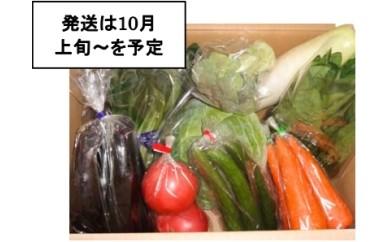 05-01 季節の野菜詰め合わせ