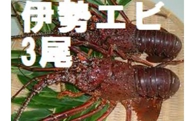 fi016 伊勢海老 (3尾 数量限定)