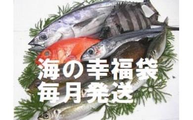 co004 なはり鮮魚福袋プレミアムセット(年12回発送)