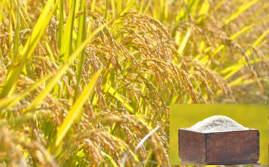 【四国一小さな町の定期便】平成30年産田野米5kg+ご飯のお供 全6回