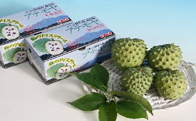 29-A-110 「森のアイスクリーム」アテモヤ