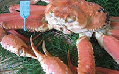 【期間限定】M006 加賀市・橋立港産 加能かに(ずわい蟹) 特大1匹【205pt】