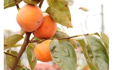 005-38宮村農園の柿(ご家庭用)