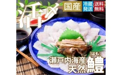 【A-4】(2019年5月ごろからの出荷!!)鱧骨切りしゃぶしゃぶ用(2人前)