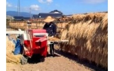 D23-2 ★自然栽培★  天日干し・さがびより玄米【数量限定】