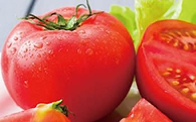 H001 【期間限定】高原トマト4kg