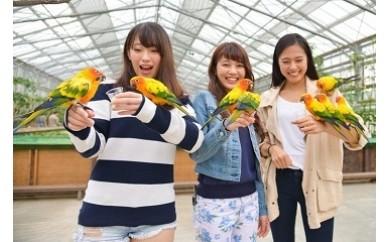 83 花鳥園 ふれあい体験&入園券