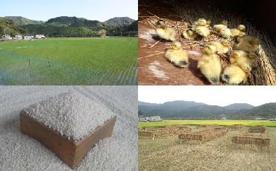 マツベジ A-2-16 山芳園 通年アイガモ農法 宿六米(もち米)5㎏