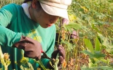 U-05 四万十川中流域で1週間暮らし、プチ農業体験もできる券