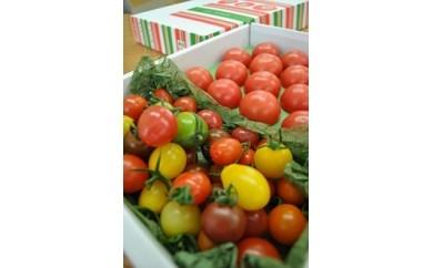 A-30 フルーツトマト食べくらべセット