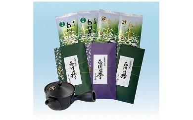 №501 ますぶち園の上級白川茶と急須
