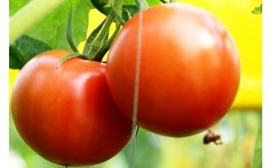 13-A フルーツトマト