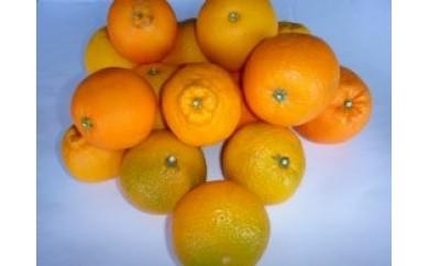 AR09 果物屋さんの厳選フルーツ【75pt】