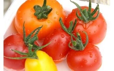 A043 トマトファーム飛騨ナチュラルミックストマト
