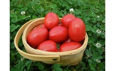 A045 トマトファーム飛騨Oh!ロメオ 加熱調理専用トマト