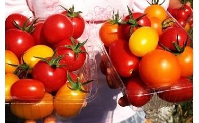 B16 トマトファーム飛騨自然栽培トマトオーナーふるさとコース