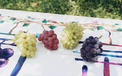 1-41 農林水産大臣賞受賞「葡萄のふくおか」の季節のぶどう3房セット