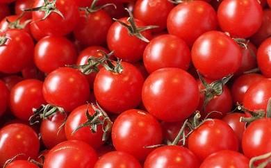 1-28 【期間限定】フレッシュミニトマトセット
