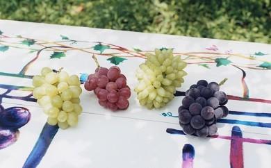 2-14 「葡萄のふくおか」季節のぶどう5房セットと巨峰ジュース