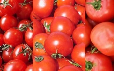 1-27 【期間限定】フレッシュトマトアソート