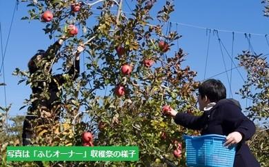 F-3 りんごオーナー【シナノスイート 中木】