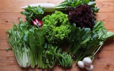 [№5799-0018]さより農園のいろどり野菜(冬のコース)