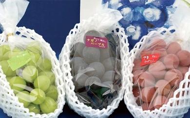 [№5767-0027]温室高級ぶどう3色セット