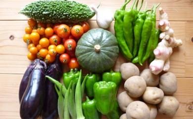 [№5799-0017]さより農園のいろどり野菜(夏のコース)