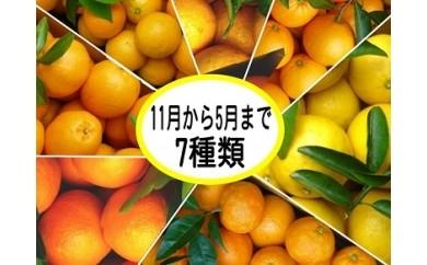 D007 東伊豆産 樹上完熟みかん・オレンジ シーズン宅配便