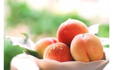 ★受付終了★ZL13 南島原の特別栽培ハウス桃【10パック】(2Sサイズ)