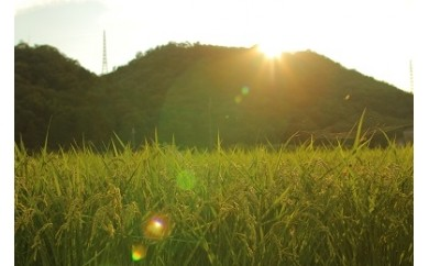 猪名川町のおこめ(キヌヒカリ10kg)