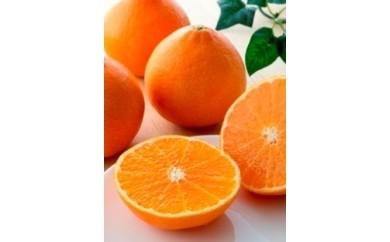 (12)愛媛の旬の柑橘 「紅まどんな」【12月頃発送】