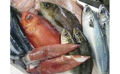 110.鮮魚セット