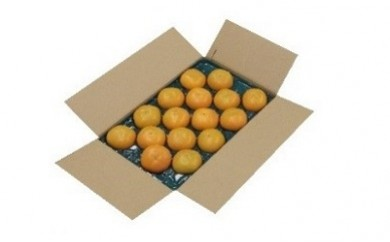 0122 甘柿
