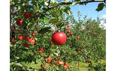 [A30-035]りんご 5㎏(10月発送)