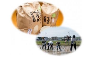 くくり米10kg田植え稲刈り体験付き