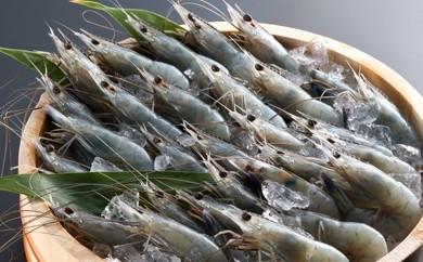 A1-17 世界最高クオリティー!お刺身品質「天使の海老」1kg(生食用)