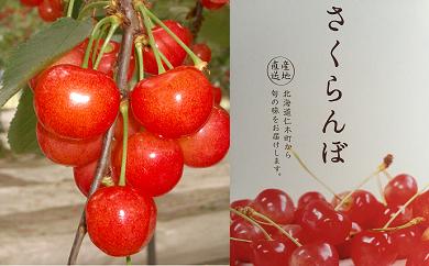 【南陽】松山商店さくらんぼ 特選品2Lサイズ以上(7月下旬)