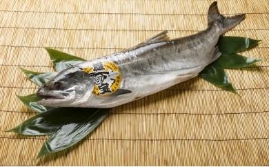 G1402 秋鮭「雄宝」(山漬)(冷凍)